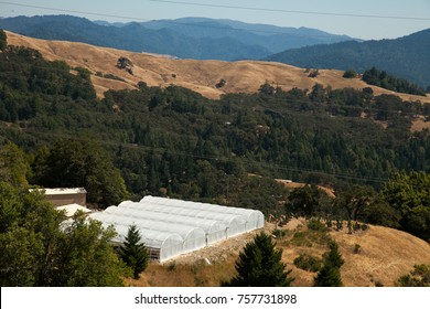 Cannabis Greenhouse in Humboldt County
