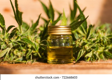 cannabis and hemp oil