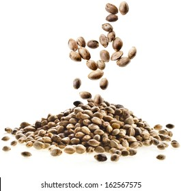 Cannabis Hemp seeds close up macro shot isolated on white background