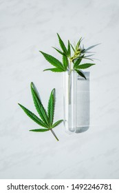 Cannabis leaf and bush in vitro. Cannabis cultivation concept for oil, medical purposes.