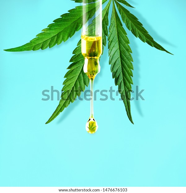 Cannabis leaf and a dropper with drop of CBD OIL close-up on blue background. Macro. Minimal concept
