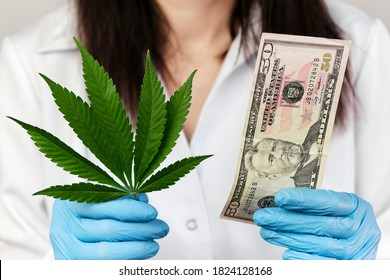 Cannabis leaf and fifty dollar banknote in woman hands in rubber gloves and medical lab coat. Incomes from products made from cannabis concept.