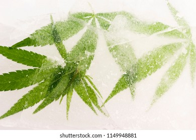Cannabis leaf frozen in ice with the backlight