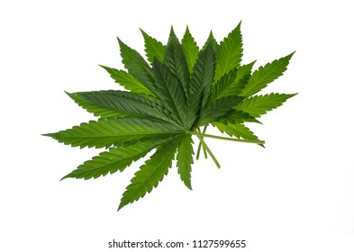 Cannabis Leaf Green