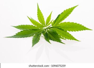 Cannabis-Blatt, Marihuana-Blatt einzeln auf Weiß