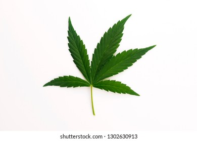 Cannabis leaf, marijuana leaf isolated on white