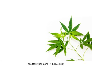 Cannabis leaf, marijuana isolated on white background