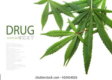 Cannabis leaf, marijuana isolated on white background copy space