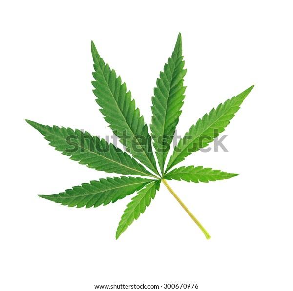 Cannabis leaf, marijuana isolated over white background