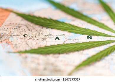 cannabis leaf on the world map C