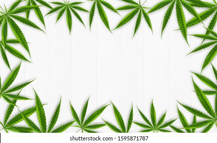 Cannabis leaves frame composition, hemp leaf on white wooden background, group of marijuana   weed leaves, green ganja herb for natural medical healthcare, flat lay, top view, copy space for banner