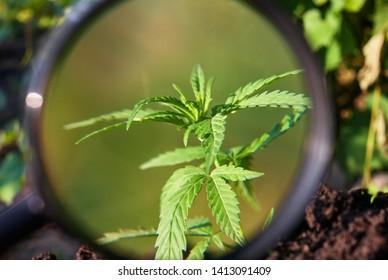 Hemp Harvesting Images, Stock Photos & Vectors | Shutterstock