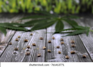 Cannabis leaves and seeds on wooden table