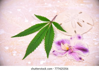 Cannabis leaves, shells and dried pink orquid petals isolated over white background - marijuana spa concept