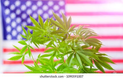 cannabis marijuana,  American flag