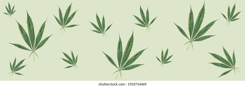 Cannabis Marijuana leaves Hemp banner texture for background.