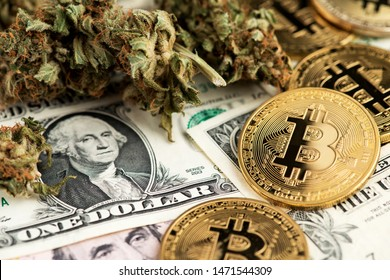 Cannabis Medical Marijuana Buds with Bitcoin Cryptocurrency coins and US Dollar Banknotes. Cannabis Medical Marijuana Business Concept. BTC Bitcoin Dollar Marijuana Cannabis CBD Hemp Stock Market Weed