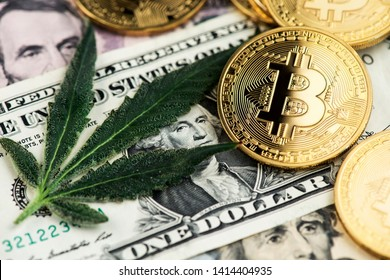 Cannabis Medical Marijuana Leaf with Bitcoin Cryptocurrency coins and US Dollar Banknotes. Cannabis Medical Marijuana Business concept. BTC Bitcoin Dollar Marijuana Cannabis CBD Hemp