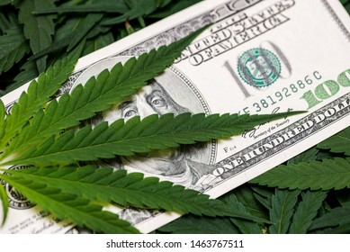 Cannabis medical marijuana leaf on one hundred dollar bills. A sheet of marijuana for money, dollars and cannabis, a legal and black market business.