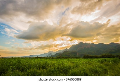 The cannabis with mountain and sky, Plants nature of farm field with green