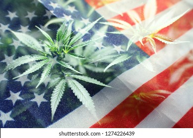 Cannabis Nation With Marijuana Leaves & American Flag