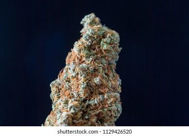 Cannabis Nug - Strain: Cotton Candy