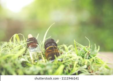 Cannabis oil, CBD oil cannabis extract, Medical cannabis concept.