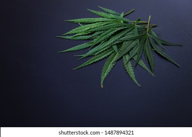 cannabis oil extracts - healthcare