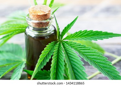 Cannabis oil surrounded by cannabis leaves.