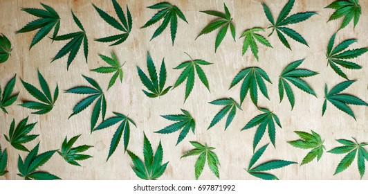 Обои на стену с конопли кто сколько раз в день курит марихуану
