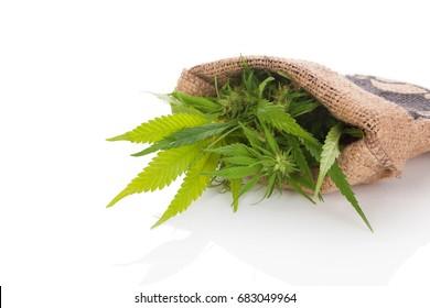Plante de cannabis en sac de poche isolée sur fond blanc. Médecine alternative, remède naturel.