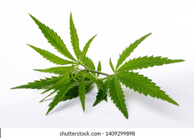 Cannabis plant leaves isolated on white background. Medicine or cosmetology theme background.