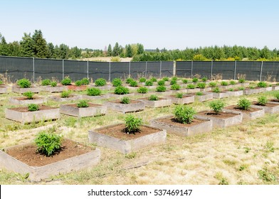 Cannabis plants on a commercial outdoor grow farm in Washington