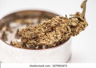 Cannabis sativa in grinder