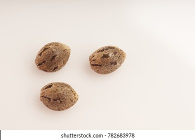 Cannabis seeds on white background macro