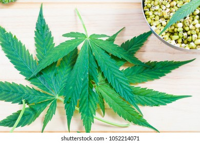 cannabis and sprouts