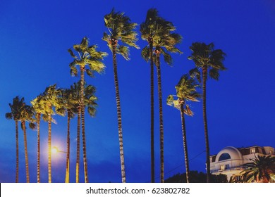 CANNES, FRANCE - 30 January, 2016: Tall exotic palm trees at night in Cannes in front of one of the Croisette's luxury hotel