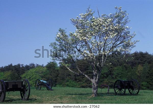 Cannon and caissons on Manassas (Bull Run) Civil War battlefield