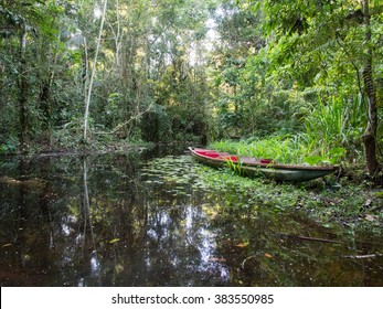 Canoe in the Amazon Rainforest, Ecuador