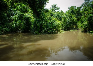 Canoe drive in the forest, eco village close to Mole National Park, Ghana.