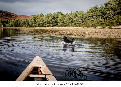 Canoeing in Loch Fleet with a dog running in the water beside the boat