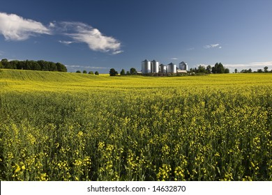 Canola field with farm structures on a background highlighted by a sunset