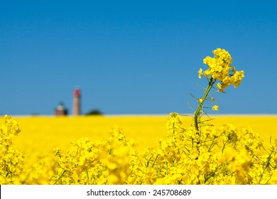 Canola field and lighthouse on the island Ruegen (Germany).