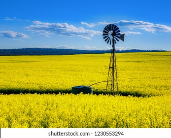 Canola fields in the country side of York Western Australia