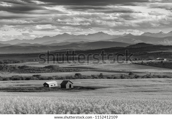 Canola fields with mountains in the distant background