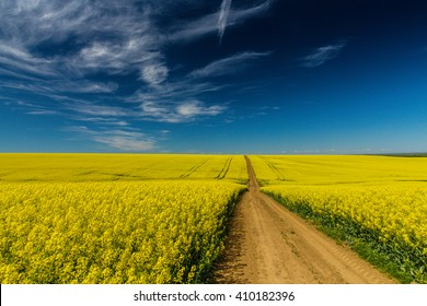 Canola fields in remote rural area