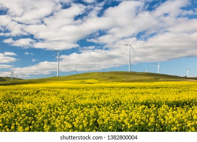 Canola fields with wind farms in rural Victoria, Australia.