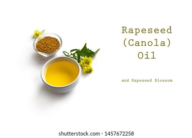 Canola (Rapeseed) Oil in bowl and Canola blossom close up. Organic canola oil on white, copy space.