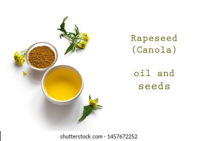 Canola (Rapeseed) Oil and Seeds in bowl and Canola blossom close up. Organic canola oil isolated on white, copy space.