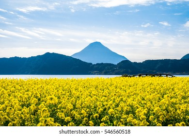 Canola and the Satsuma Fuji Mountain at Japan South Kyushu Kagoshima Ibusuki